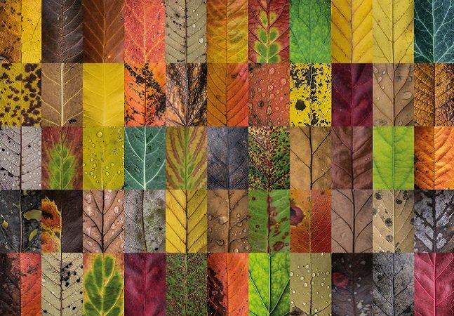 Fotógrafa capta a beleza e a diversidade das folhas no outono