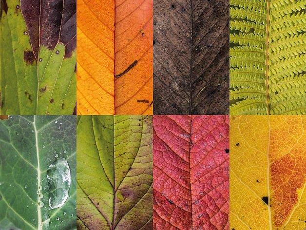 outono13