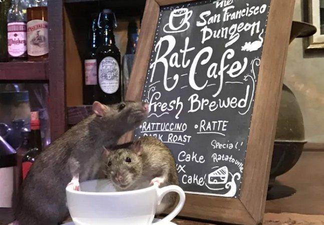 'Rat café' permite aos fãs de roedores tomar uma bebida quente com seus amiguinhos
