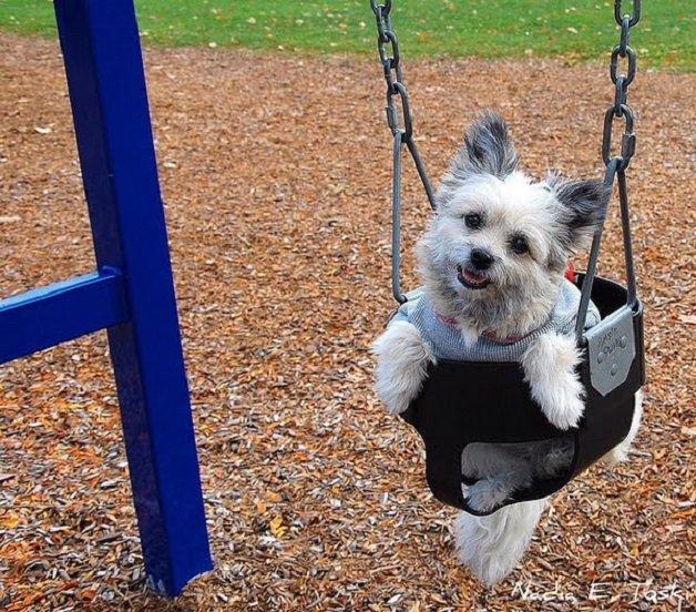 swinging_dogs_07