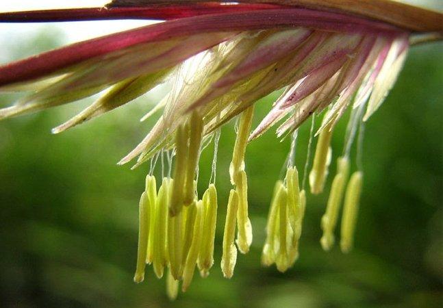 As flores de bambú que aparecem a cada 100 anos lotaram esse parque japonês