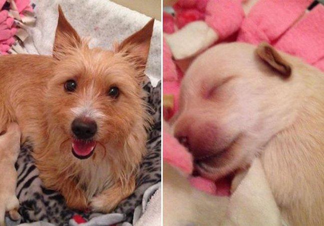 Filhotes arremessados de janela de carro são adotados por cadela que perdeu sua cria