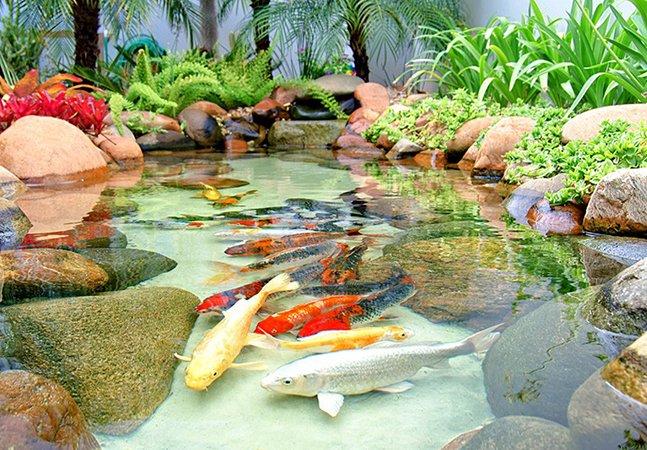 Dicas para você ter o seu próprio lago de carpas oriental