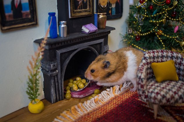 Hamsters11