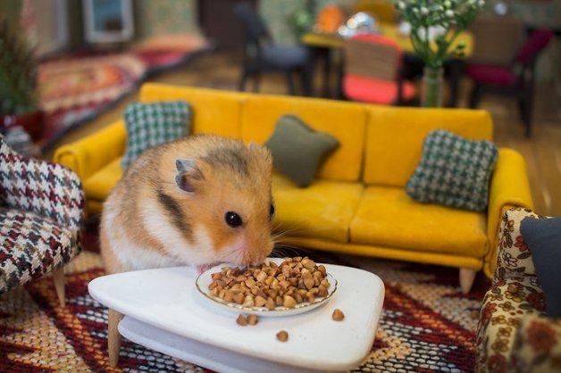 Hamsters12