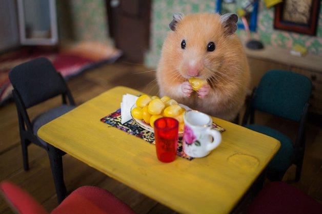 Hamsters9