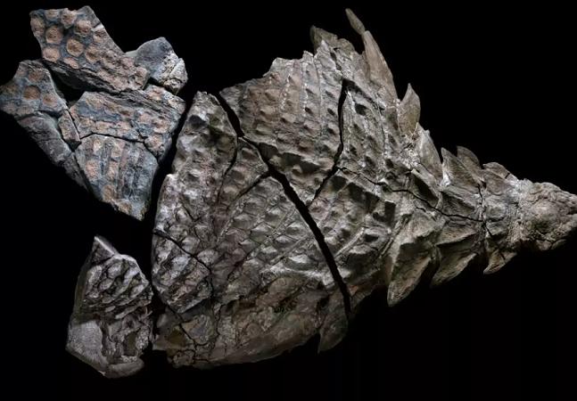Um fóssil de dinossauro com mais de 100 mil anos foi descoberto em uma mina no Canadá