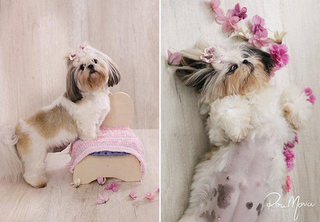 Essa cadelinha mudou a vida de uma amiga e agora ganhou um lindo ensaio de gravidínea