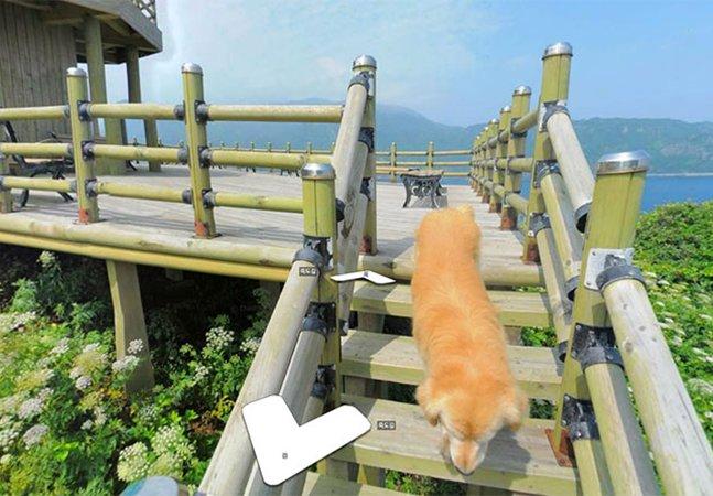 O cão que acompanhou os fotógrafos do Street View e virou o protagonista das imagens
