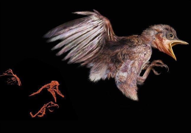 Cientistas descobrem filhote com 100 milhões de anos (!) praticamente intacto preso em um âmbar
