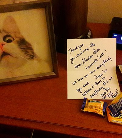 Casal pede boas-vindas com gato e chocolates a um hotel e a resposta é puro amor