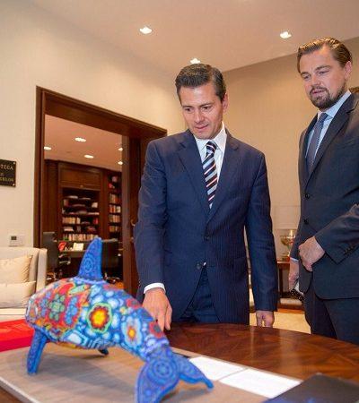 Leonardo DiCaprio arrasa de novo e ajuda México a salvar espécie de golfinho em risco de extinção