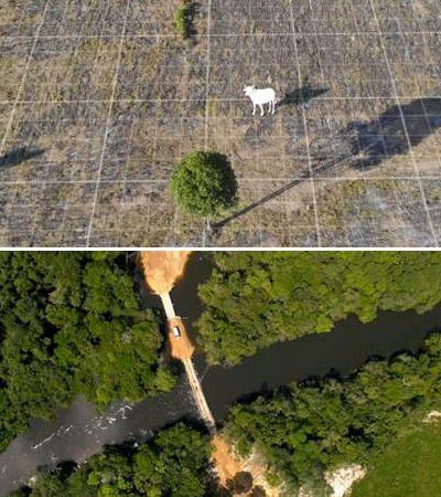 'Eu sou Amazônia', uma plataforma do Google pra entender como a produção de carne destrói a floresta