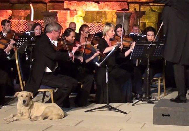 Cão apaixonado por música clássica rouba a cena durante concerto da Orquestra de Viena