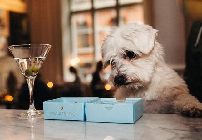 Restaurante cria cardápio especial para pets que inclui até 'cerveja pra cachorro'
