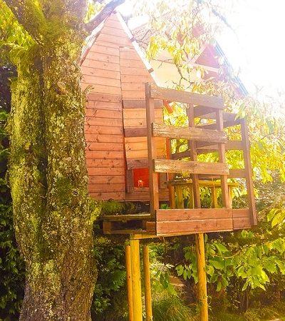 Oficina ensina a construir casa na árvores em apenas um fim de semana