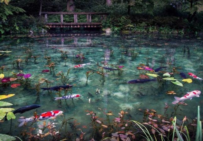 No Japão existe uma incrível lagoa que parece uma pintura de Monet