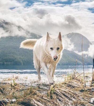 Cadela que vivia com medo após ser adotada se torna a melhor musa que seu dono fotógrafo poderia pedir