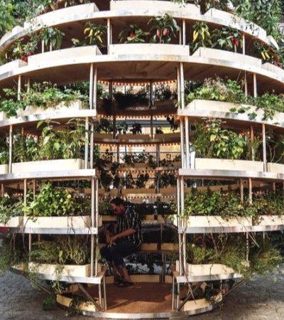 Aprenda passo a passo como montar uma horta urbana esférica