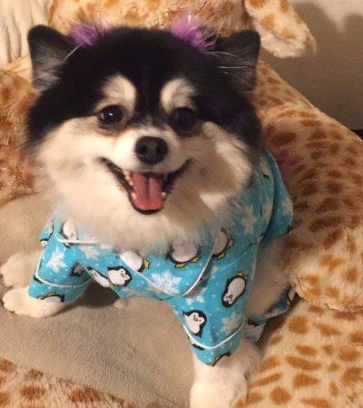 Sem invejinha! Tia deixa carta divertida com instruções para cuidar de cadela