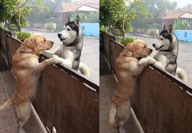 Este cão se sentiu sozinho e escapou do quintal para abraçar seu amigo