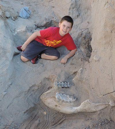 Garoto descobre por acaso fóssil de um milhão de anos
