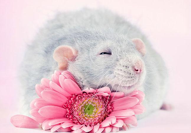 Ela passou anos fotografando ratos para acabar com sua imagem negativa