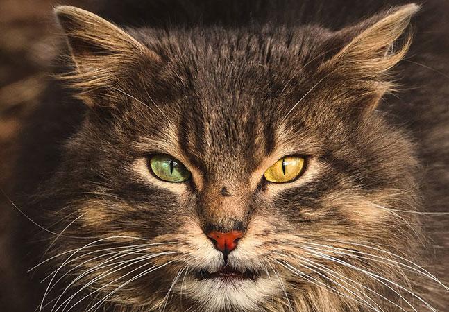 Adolescente faz maravilhosos cliques de gatos de rua para conscientizar sobre adoção