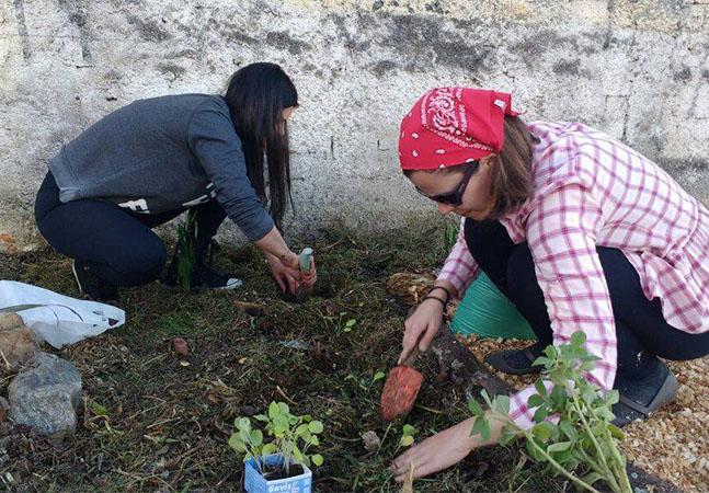 Curitiba autoriza cultivo de horta na calçada e prática deve ser regulamentada em breve