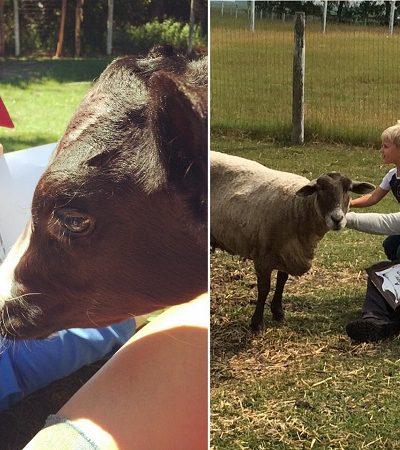 Programa estimula crianças a ler praticando em fazenda de animais resgatados