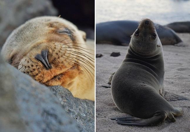 Fotógrafa descobre por que leões marinhos são chamados de catioros do mar
