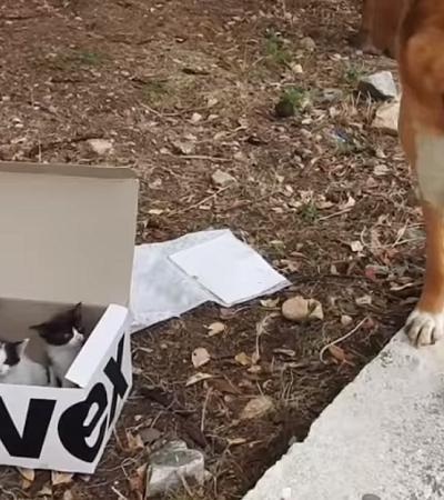 Cãozinho encontra caixa misteriosa nas montanhas e acaba se tornando herói