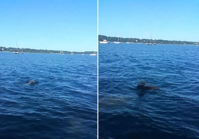 [Vídeo] Cão salva veado de afogamento e mostra que existe solidariedade no reino animal