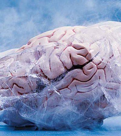 Neurocientistas anunciam que em 3 anos cérebros congelados poderão ser despertados e transplantados