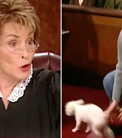 Durante julgamento para decidir 'guarda' de cão juíza solta o animal para que ele decida