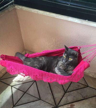 Este gato ganhou uma mini rede para poder relaxar ao lado dos donos