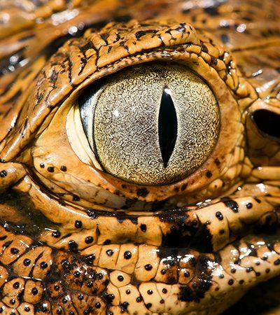 Fotografia e empatia: o trabalho e a visão de um fotógrafo de natureza e conservação no Brasil