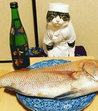 Todo dia ela veste seu gato com uma roupa diferente para o jantar