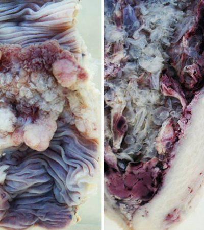 Fotógrafa retrata partes de cadáveres para lidar melhor com a morte e mostrar a beleza interior do corpo humano