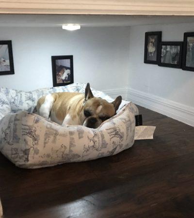 Ele usou a criatividade e algumas ferramentas para fazer um quarto bem especial para o seu cachorro