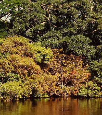 Governo libera reserva de 47 mil Km² na Amazônia para exploração