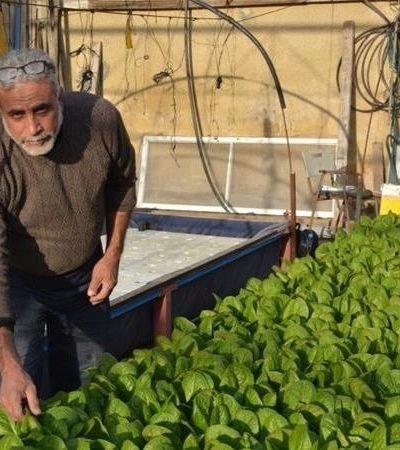 Moradores de Gaza cultivam hortas nos telhados como alternativa à insegurança alimentar