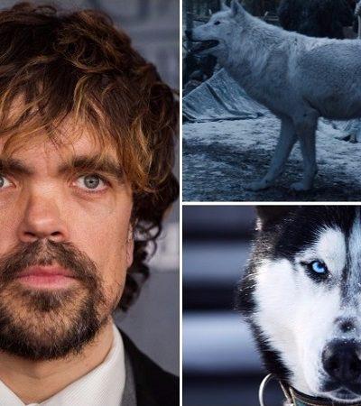 Peter Dinklage, o Tyrion de GoT, pede que fãs não adotem huskies se não estiverem prontos para mantê-los