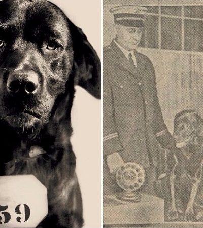 A história real por trás da foto na prisão de um cachorro 'assassino' é na verdade uma fonte de inspiração