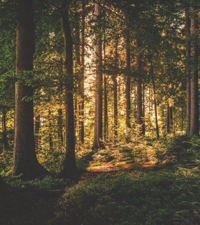 Conheça a 'Floresta de Trump', iniciativa que está plantando árvores pelo mundo inteiro