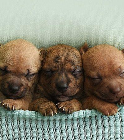 Fotógrafa usa suas habilidades e muito amor para mostrar cachorrinhos recém-nascidos ao mundo