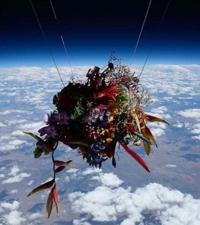 Projeto experimental envia flores ao espaço e o resultado é pura poesia