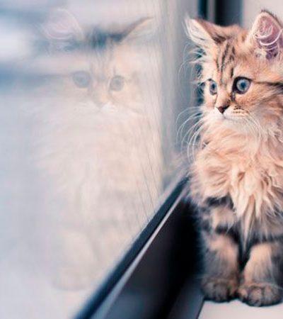 Japão lança 'Cat Café Train' em viagem de 2 horas e meia para incentivar adoção de gatinhos