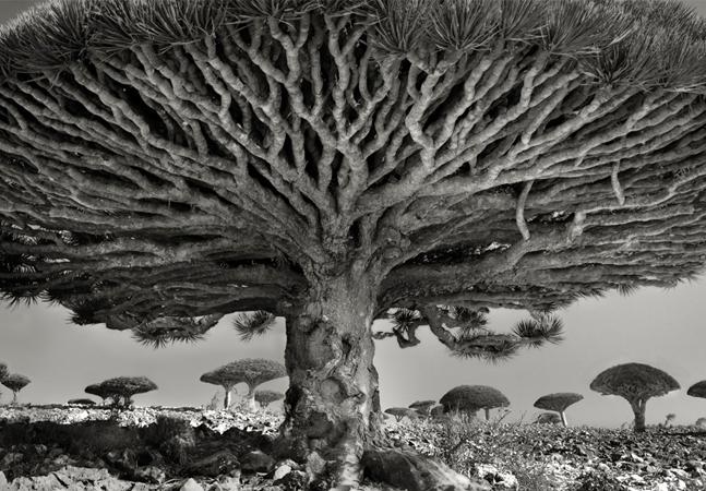 A fotógrafa americana que passou 14 anos fotografando as árvores mais antigas do mundo
