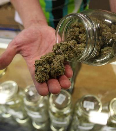 Como é trabalhar de budtender, o 'farmacéutico' da maconha legalizada nos EUA